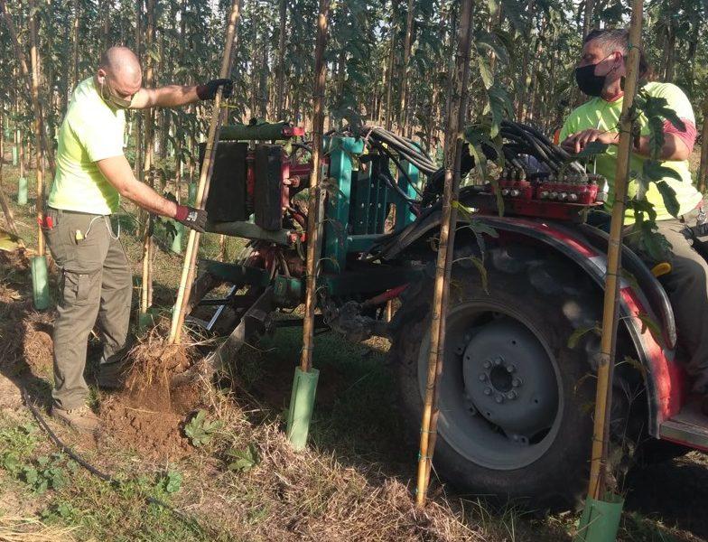 arrancamos árboles de hoja caduca